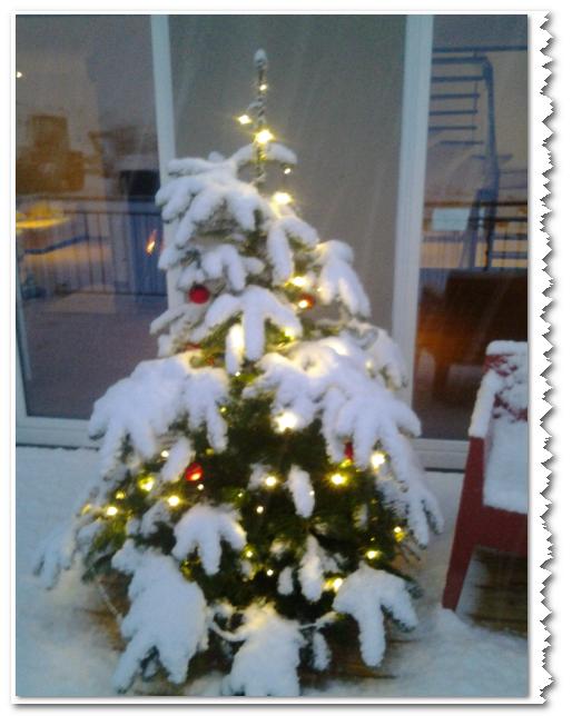 Unser erster eigener Baum
